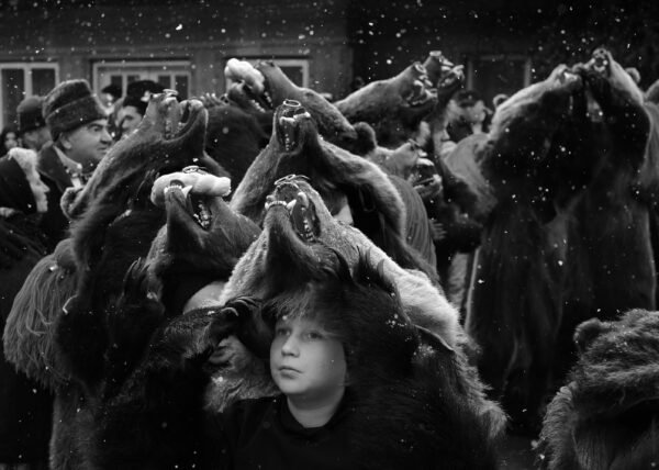 Jocul ursilor - Ceata de ursi din Asau