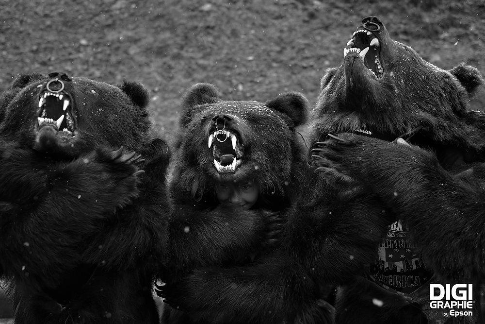 jocul-ursilor-dan-malureanu-digigrafie