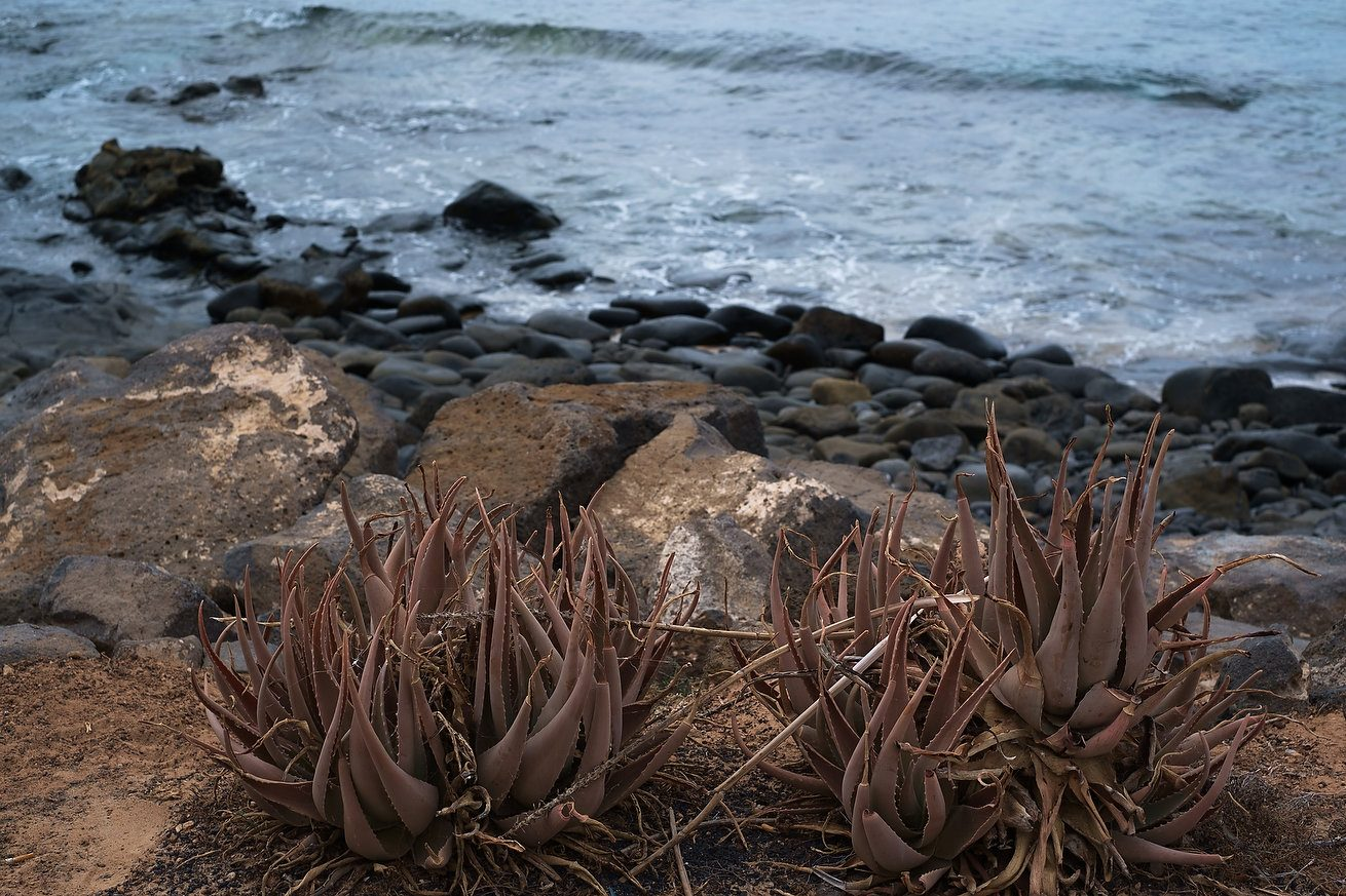 Fotograf-Dan Malureanu-Workshop-Photohotel-Lanzarote-005