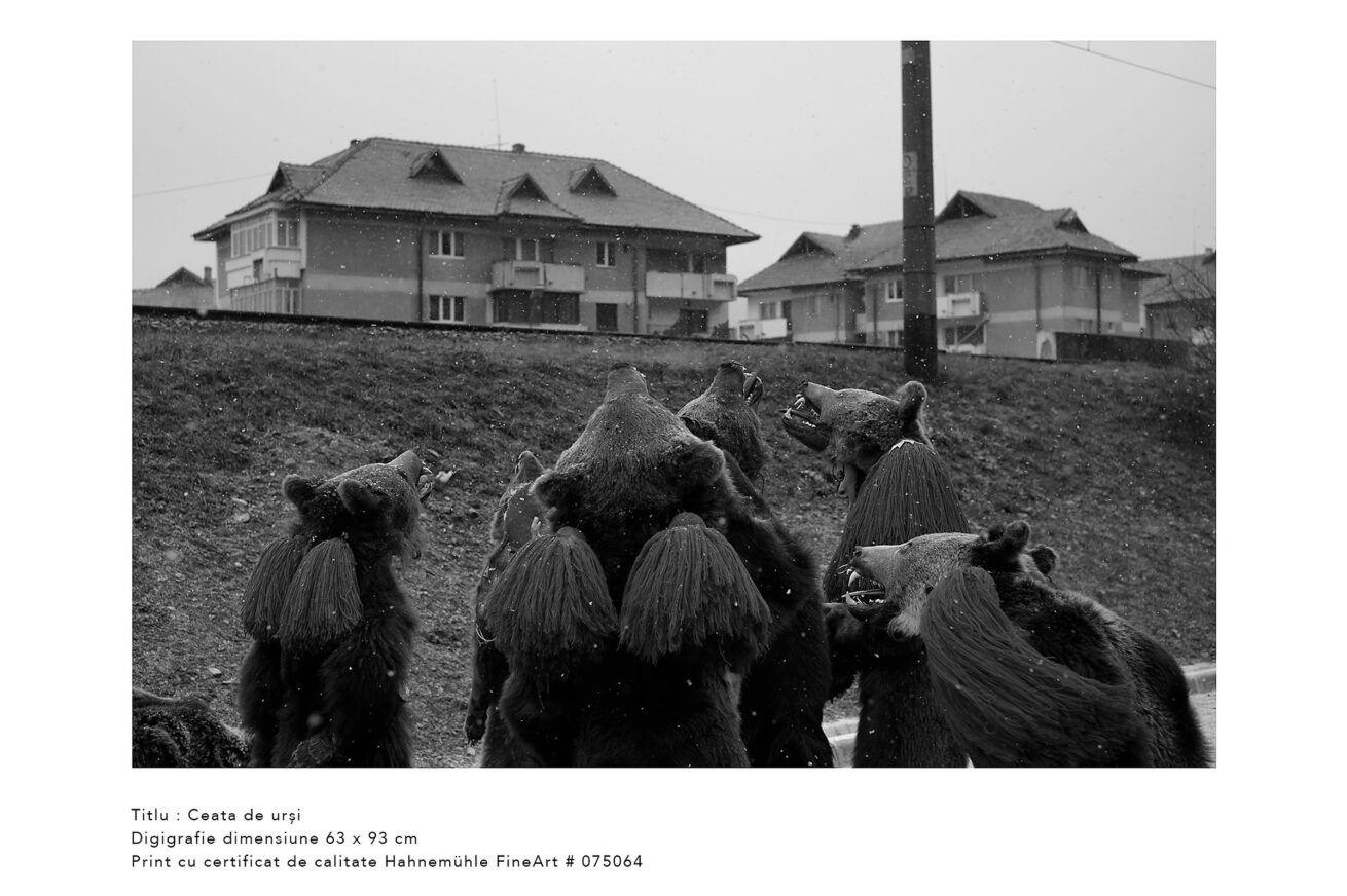 ceata-de-ursi-jocul-ursilor-foto-dan-malureanu-09