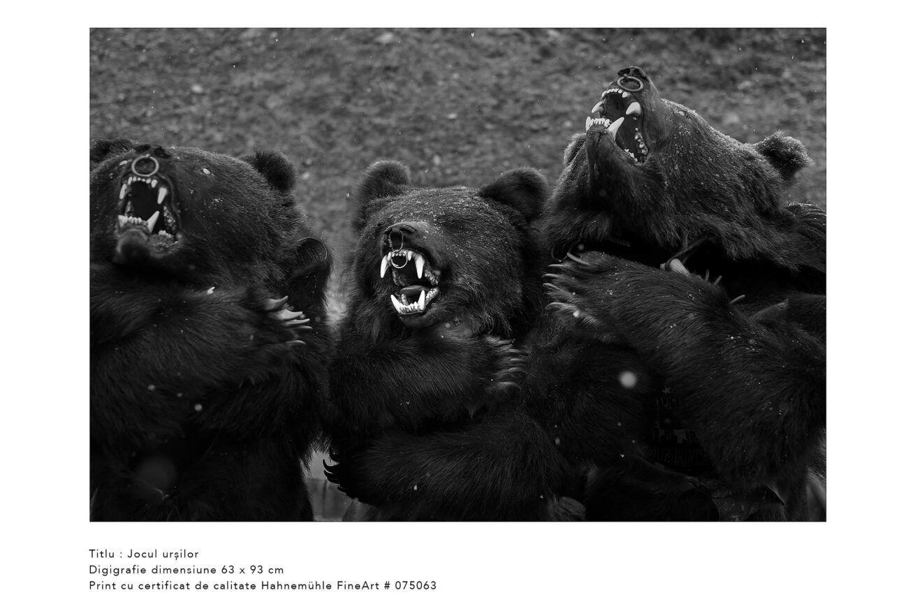 jocul-ursilor-jocul-ursilor-foto-dan-malureanu-010