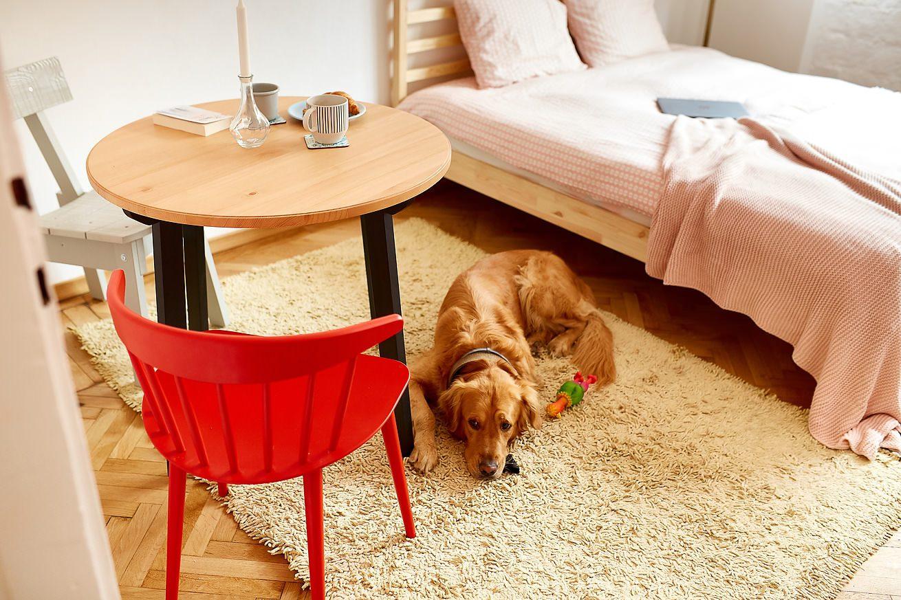 fotografii-apartamente-airbnb-regim-hotelier-Apollonia Hirscher-Brasov-08