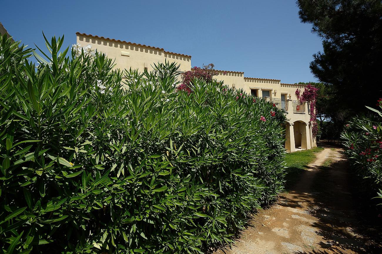 Vegetatie din gradina resortului
